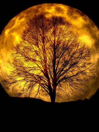 moon-165487_1920